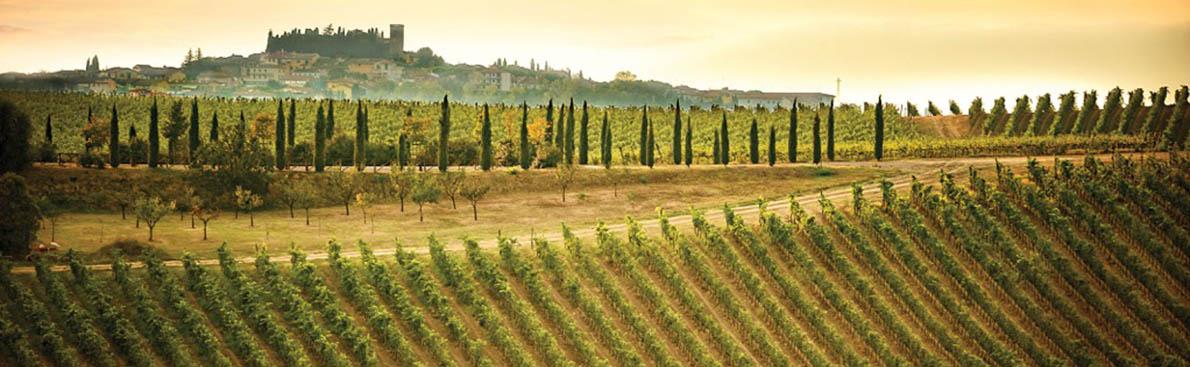 Vino-Castellino-vigneto-chi-siamo
